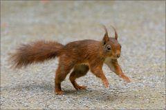 Hüpf - Hörnchen...