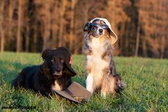 Hüte-Hunde