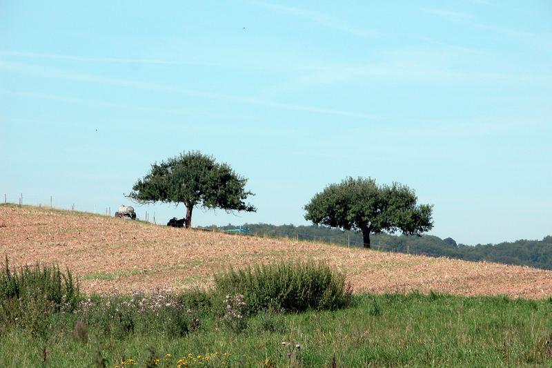 Hütebäume in Mittel-Gründau