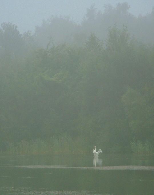 Hüterin des Sees