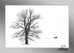 - Hütte + 1 Baum -