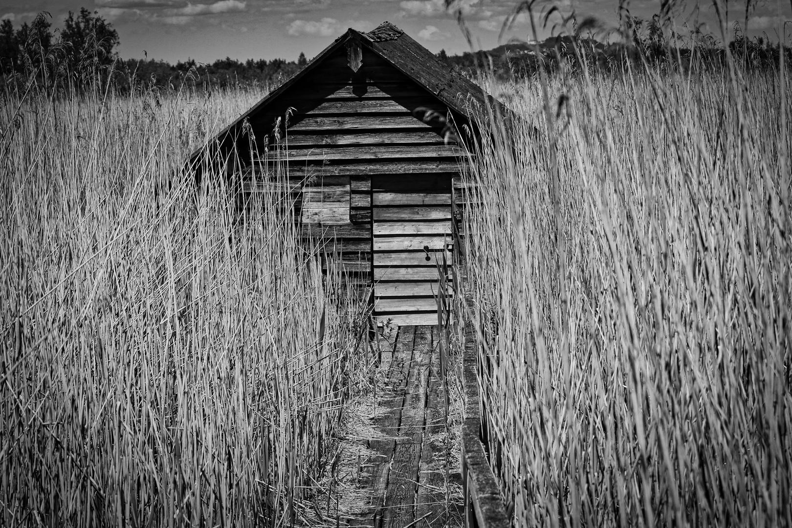 Hütte im Schilf