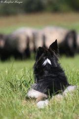 Hüttehund bei der Arbeit - Rück-Ansicht ;-)