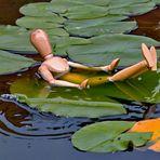 Hugo Holzmann geniesst ein Bad auf den Seerosenblättern!