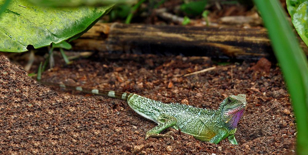 huhu ich bin das schönste reptil das es gibt
