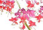 Hummingbird flowers