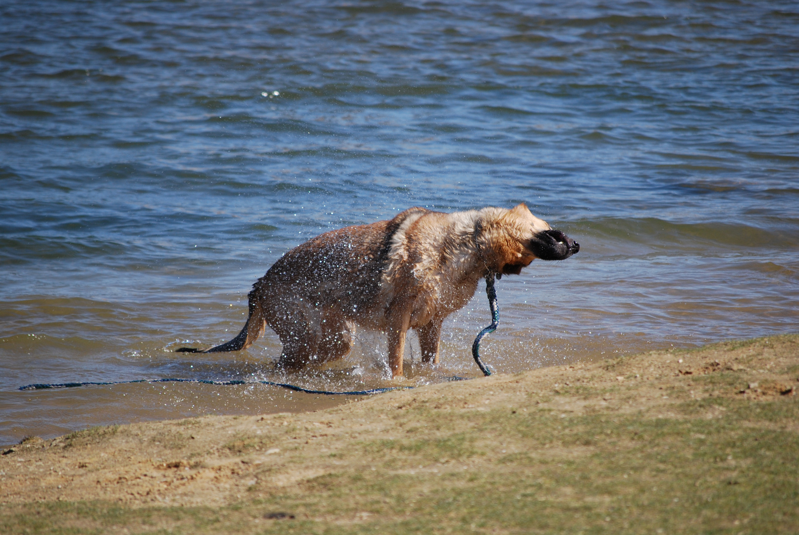 Hund am See 2