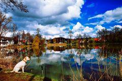 Hund am See