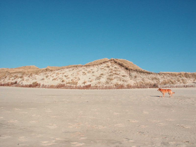 Hund auf weiter Flur am Sylter Strand