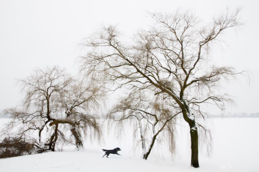 Hund, Baum, Alster