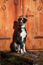 Hund bewacht Tür