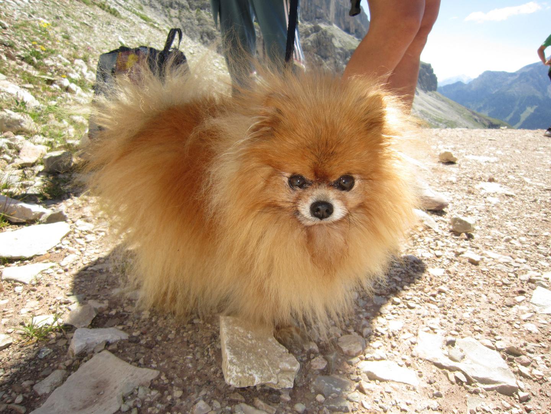 Hund Dolomiten Explosion Spitz Foto Bild Tiere Haustiere