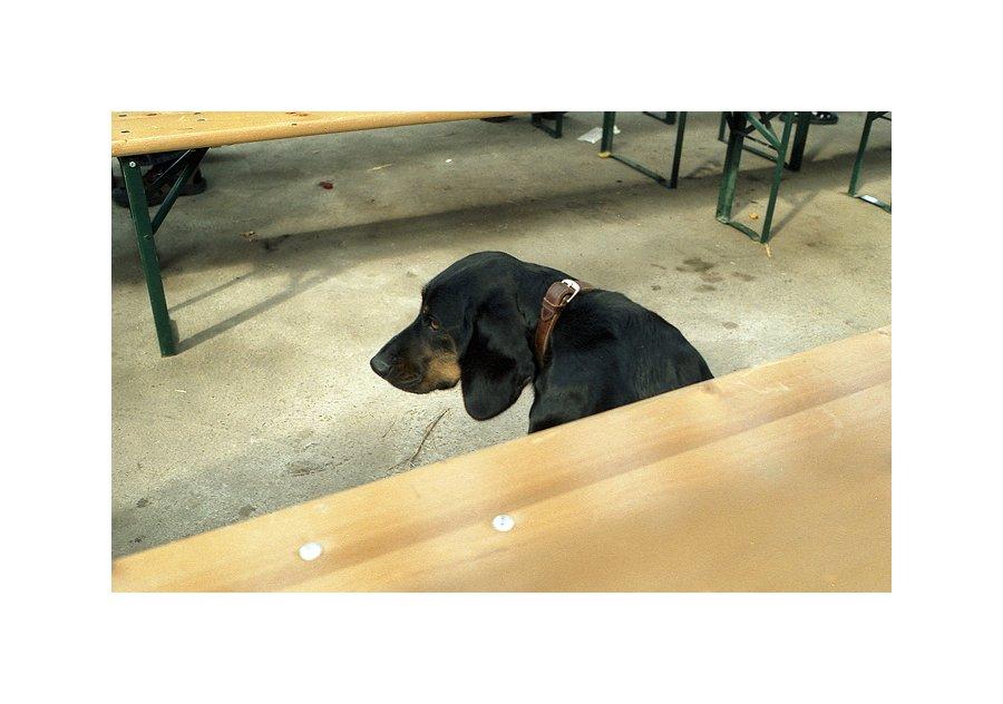 Hund, einsam