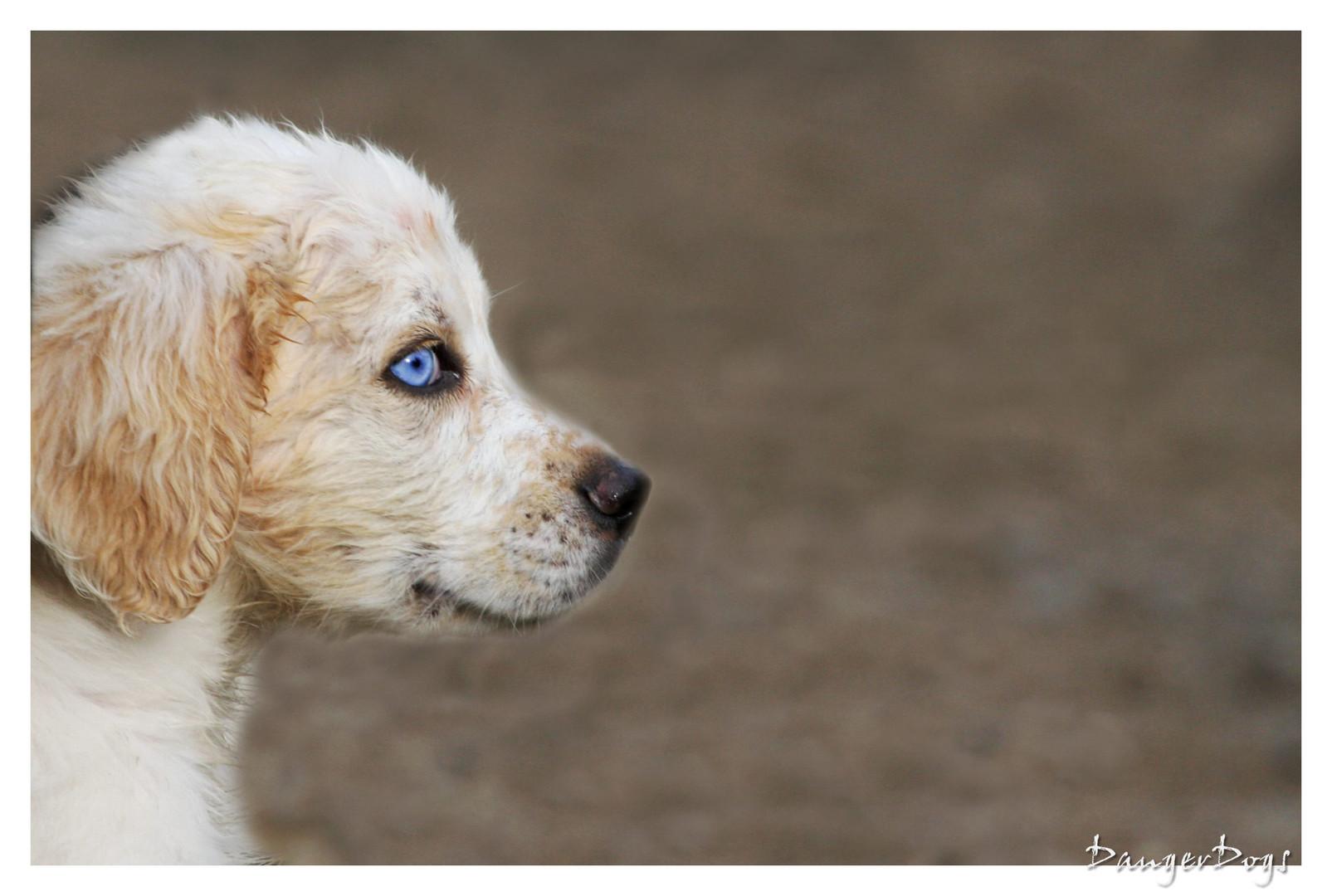 Hund.............. Hallo? Haallooo...?