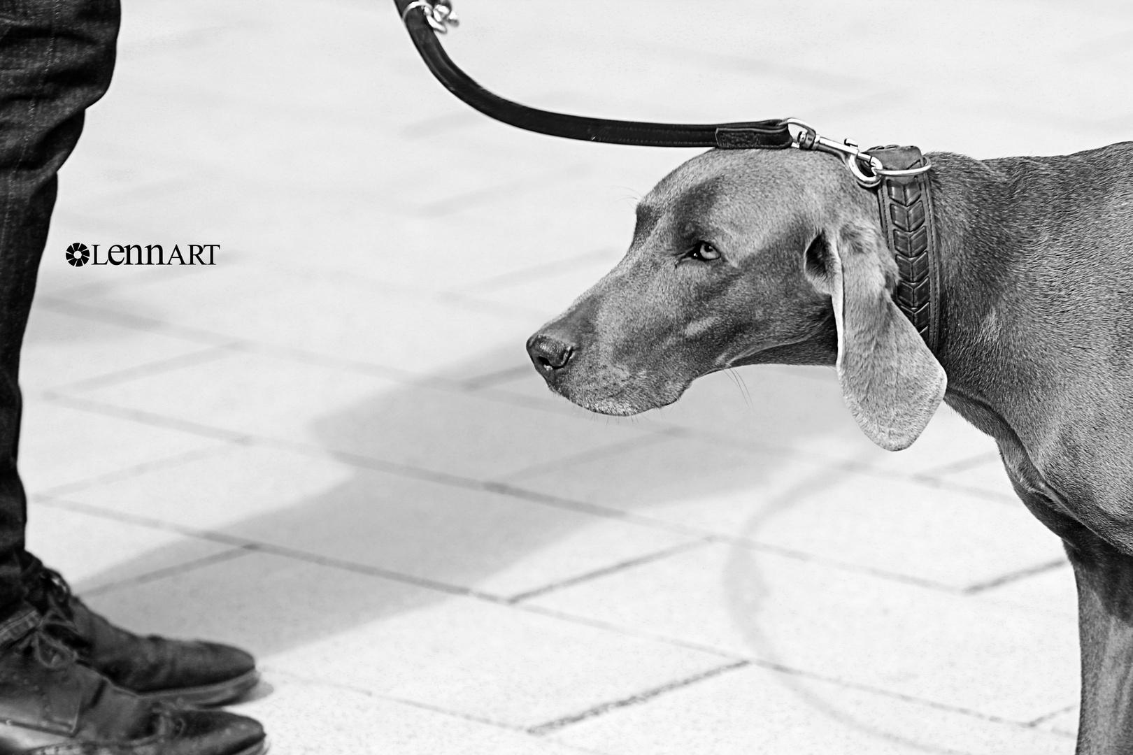 Hund & Herrchen.
