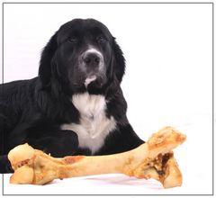Hund im Glück -1-