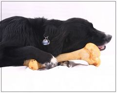 Hund im Glück -2-