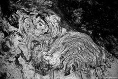 Hund im Holz