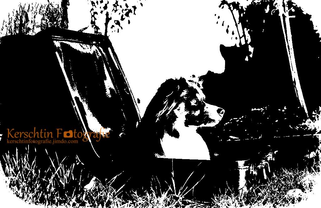 Hund im Koffer SW