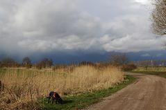 Hund in Landschaft