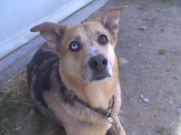 Hund Luna