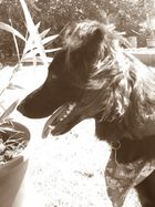 hund. mein hund. ronya.