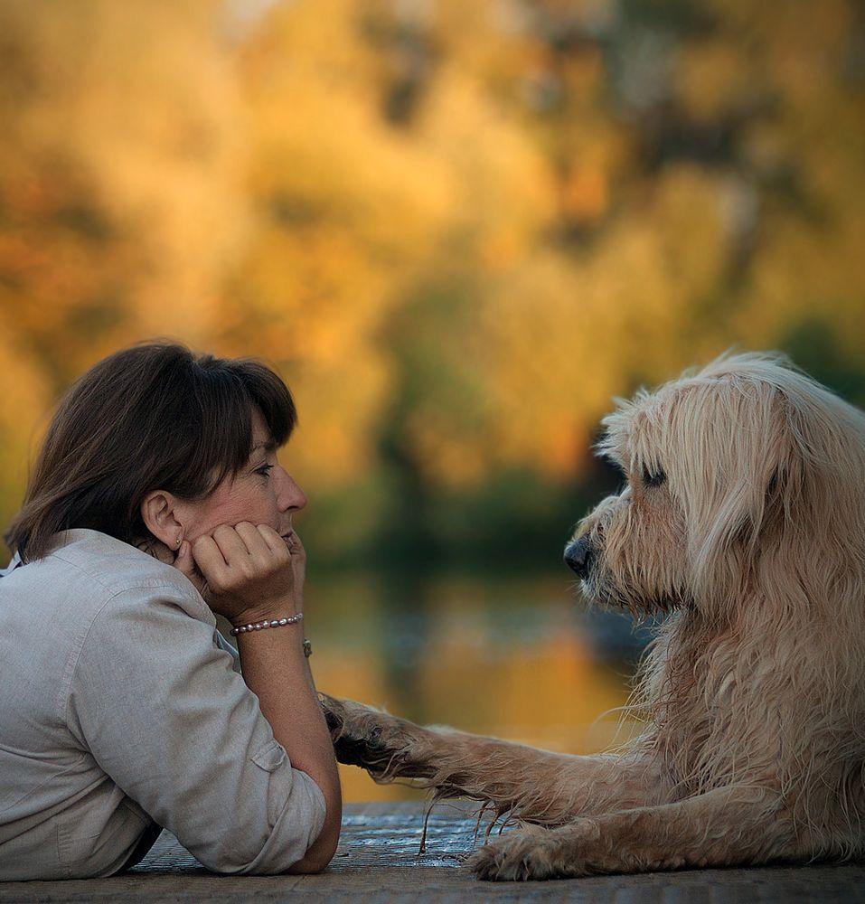 *Hund-Mensch-Kommunikation* Foto & Bild | tiere, tier und