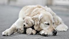hund mit jungem teddy