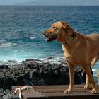 Hund mit Meerblick