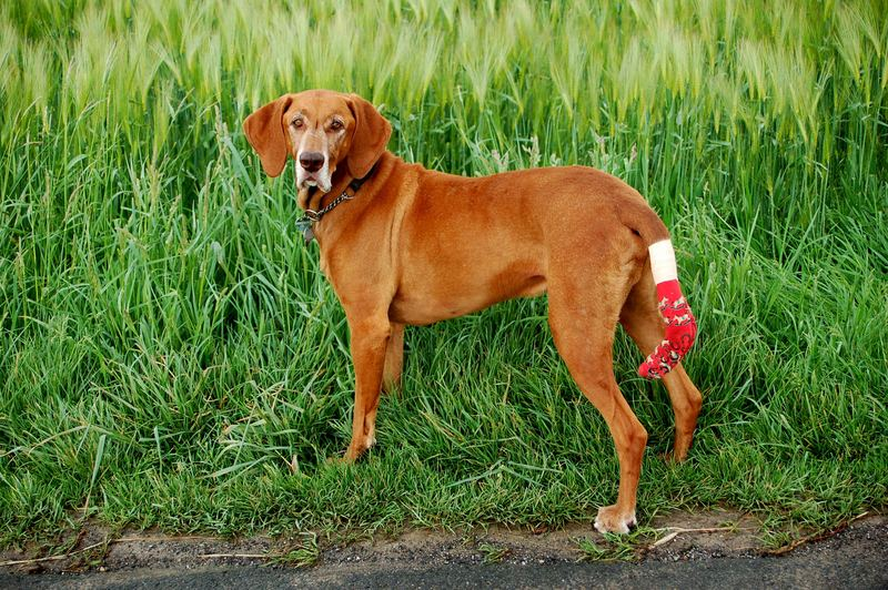 Hund mit Socke