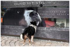 Hund mit Stil