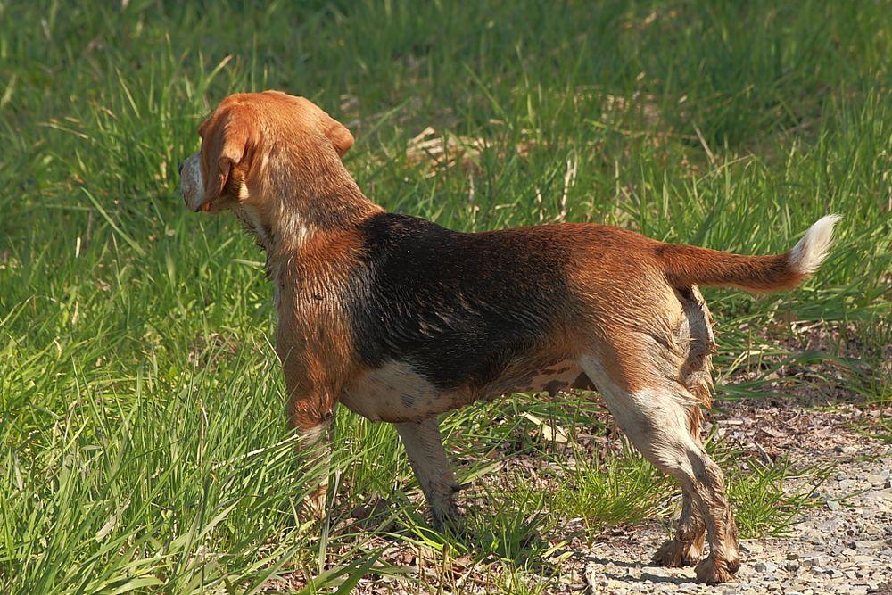 Hund nach Schlammbad