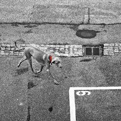 Hund Nr 6.