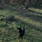 Hund olfaktiert gegen die Sonne.