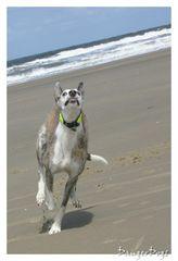 Hund.............. Sauschnell