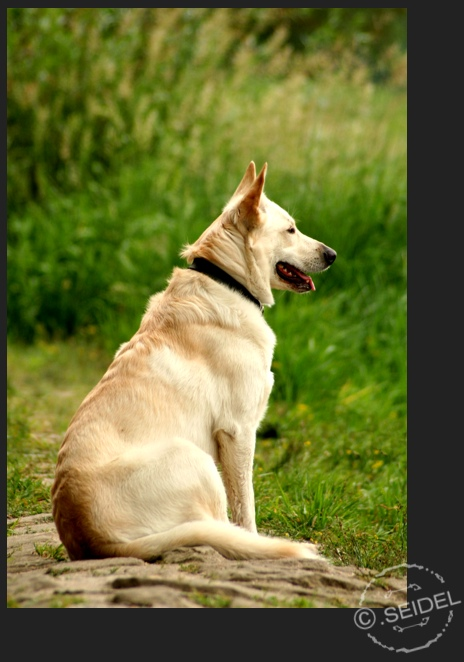 Hund sei wachsam