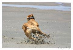 Hund.............. Slalom