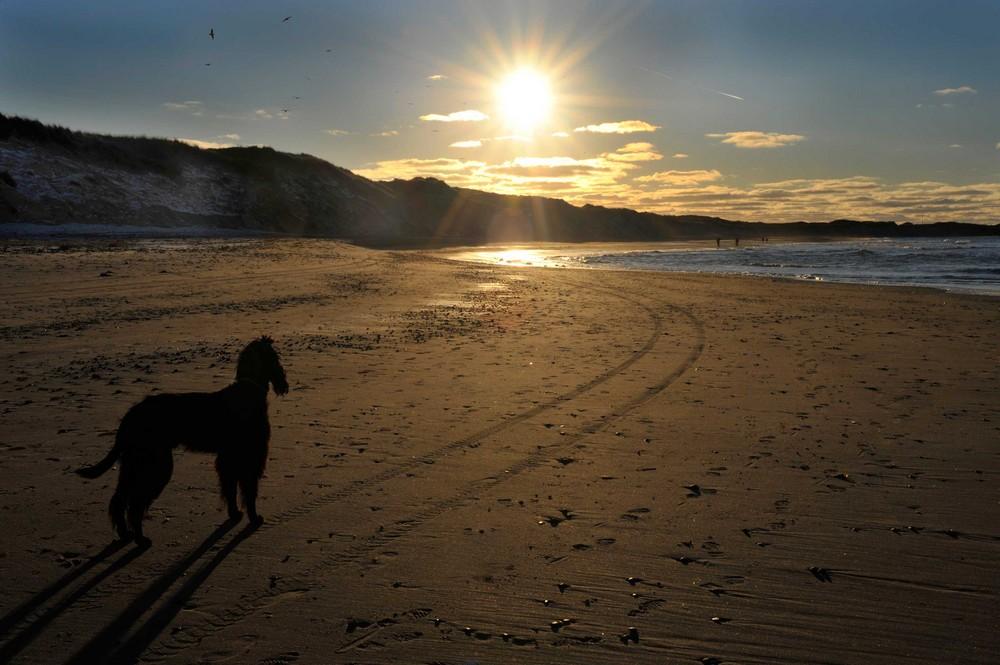 Hund - Sonne