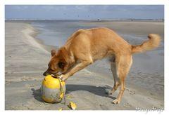 Hund.............. Strandgut