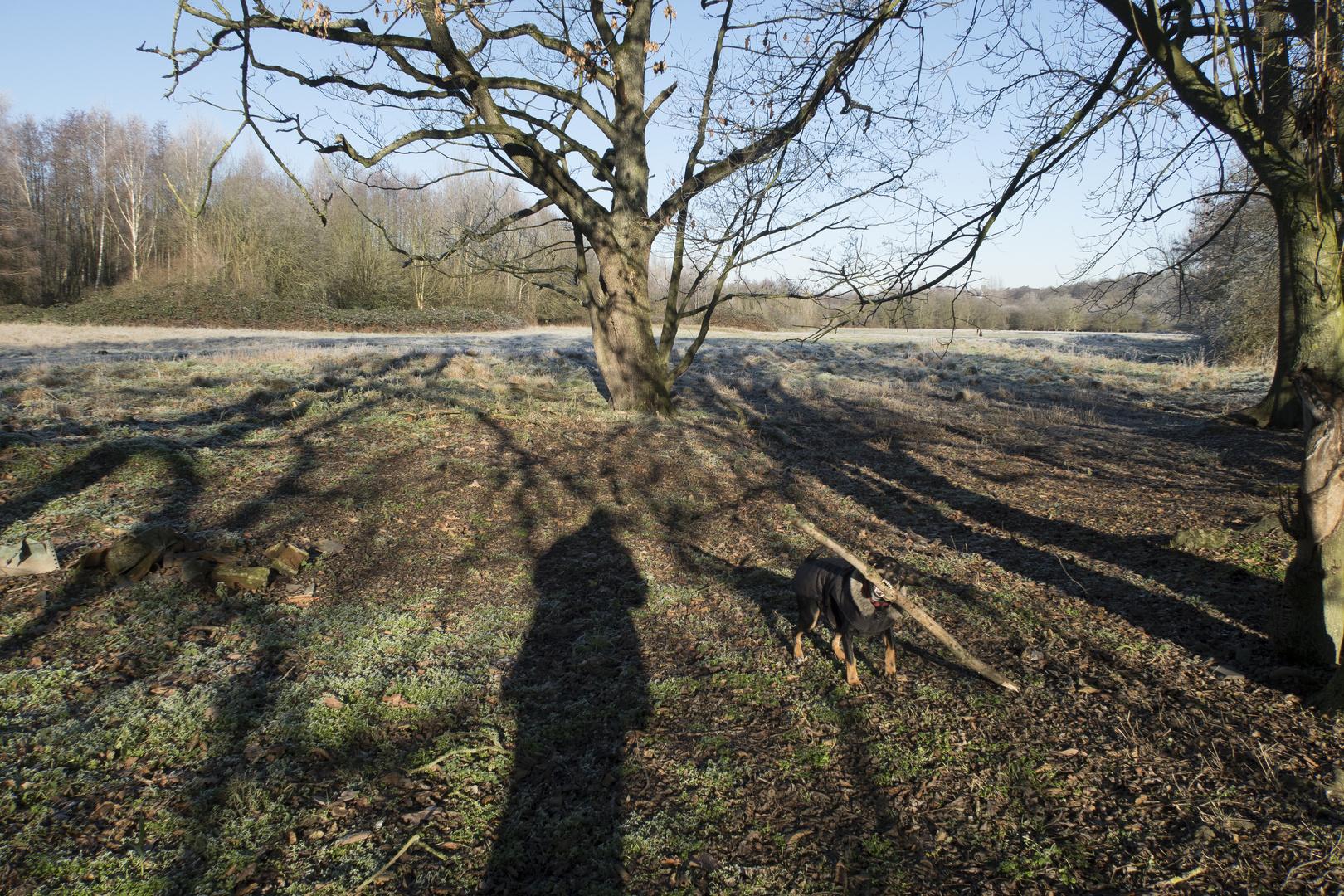 """Hund tritt auf: """"Das Schattenholzbiest der Ruhrauen."""""""