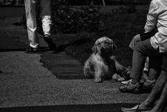 Hund und Fuß