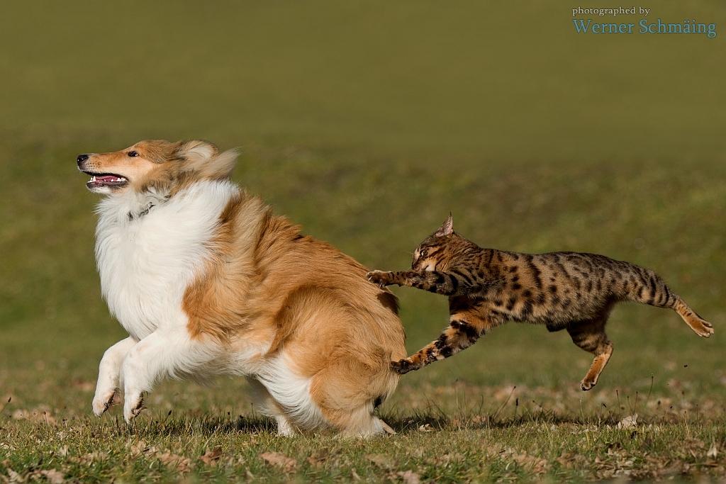 Hund und Katz ...