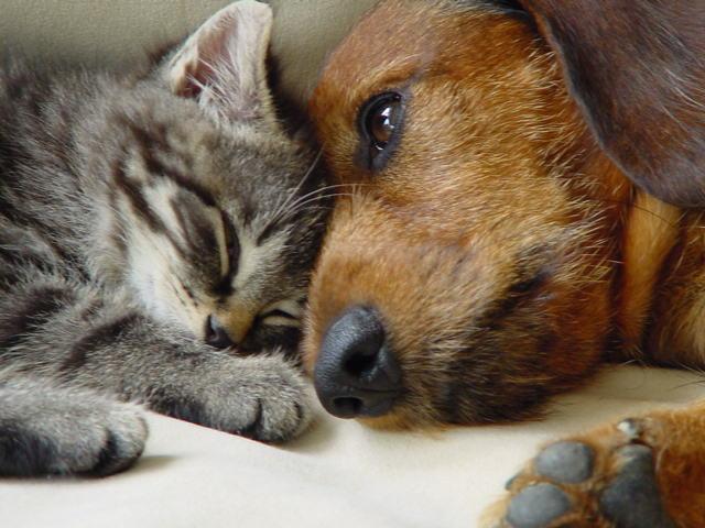 hund und katz foto  bild  tiere tierfreundschaften