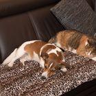 Hund und Katze ganz entspannt