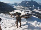 Hund und Schnee