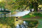 Hund und Spiegelung im Herbst
