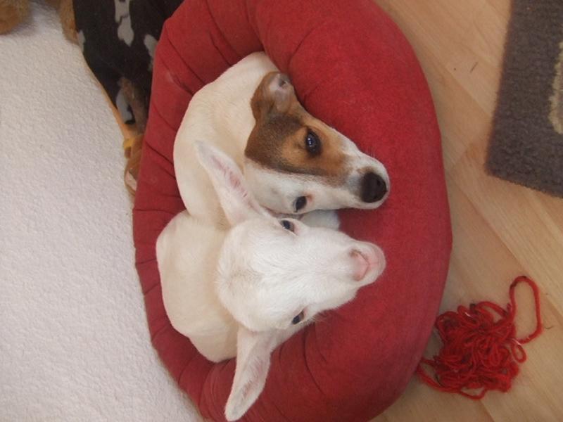 Hund und Ziege