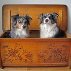 ' Hunde-Box'