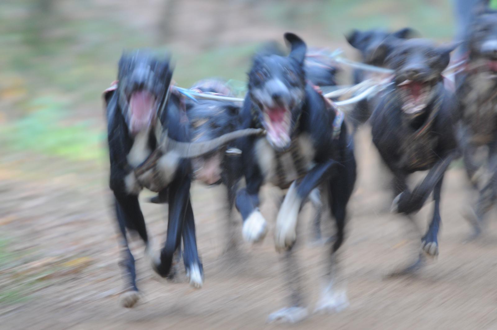 Hunde-Dynamik 1