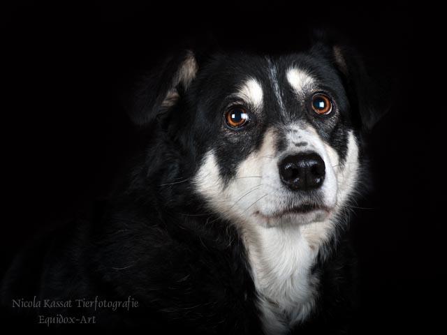 Hunde-Fotoshooting Reitverein Rudow - Mascha - II
